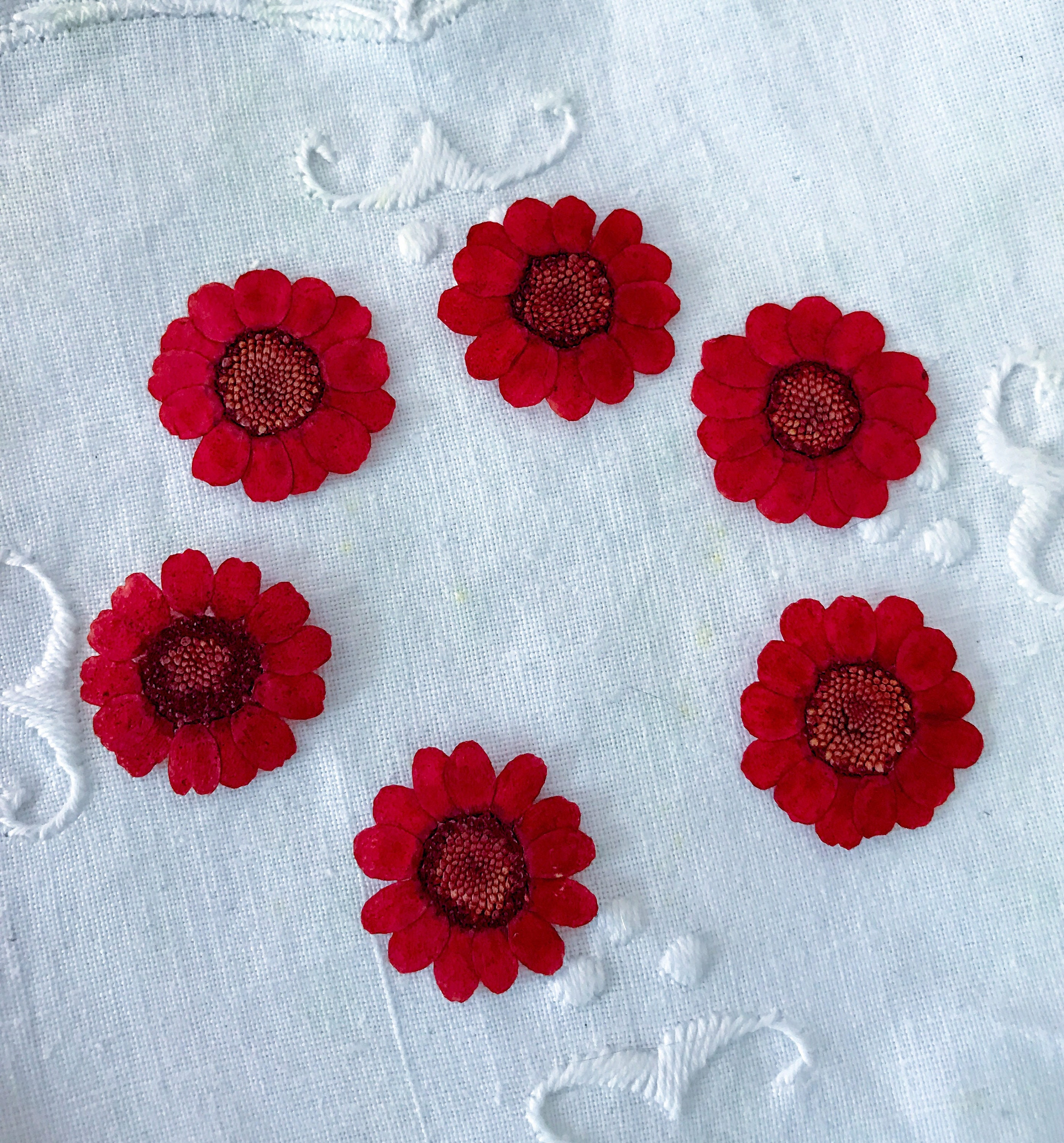 Real Red Carnation Small Red Flowers Pressed Red Flower Pressed ...