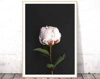 Flower Print, Botanical Art, Peony Art, Flower Photography, Flower Poster, Botanical Photo, Flower Wall Art, Floral Print, Digital Download