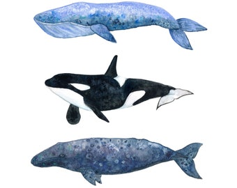 "Three Whale Pod Watercolor Painting Art Print  (8.5x11"")"