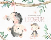 Opossum. Watercolor animals clip art, wild, native, forest, wreath, florals, little possum, North America, greeting, babyshower, woodland