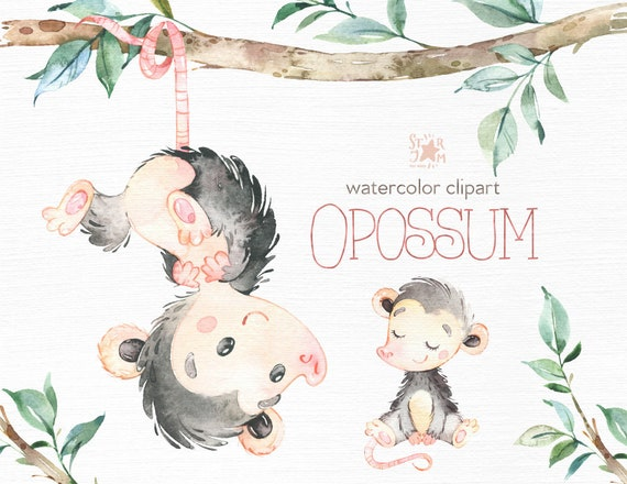 Opossum clipart Common opossum didelphis marsupialis png clipart 6018124  pikpng   Nappie.baebaebox.com