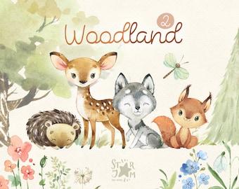 Woodland 2. Little animals watercolor clip art, wolf, squirrel, deer, hedgehog, florals, baby-shower, woods, wild, forest, baby, nursery