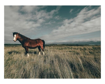 Skandi Horse Wild Horses Landscape / Minimalist / North Wales  Wall Art / Print / Photography / Photograph / Horse / Rural / Nature / Rustic