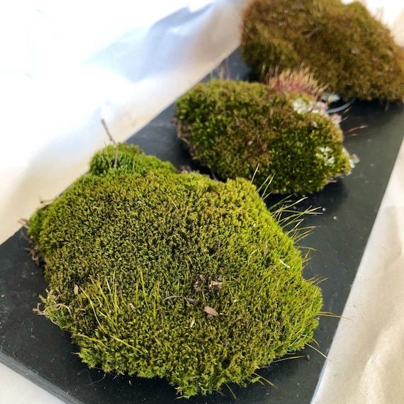 Set of 2 Buy 3 Save $5 Miniature Fairy Garden Green Specialty Drinks