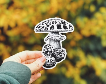 Mushroom Vinyl Sticker, Nature -Inspired for Laptop, Waterbottle or Bumper Sticker Use