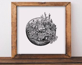 Succulent Terrarium Fine Art Print