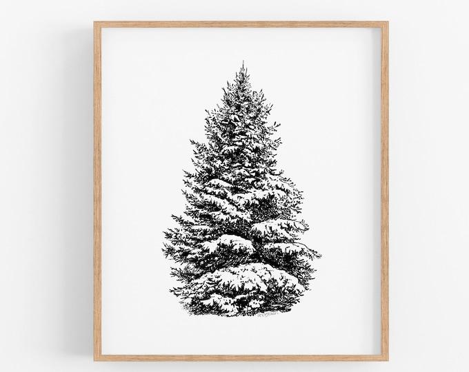 Fir Tree Art Print
