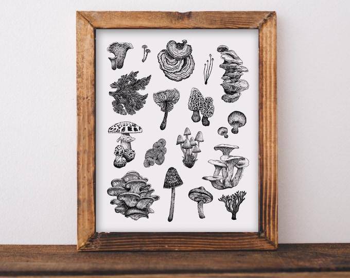 Mushroom Varieties Fine Art Print