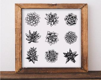 Succulent Varieties Art Print