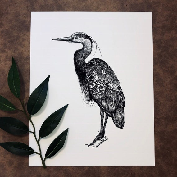 Mountainous Heron