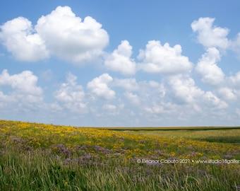 Wildflower Fields, Rural Conrad Western Grundy County Iowa - Photography by Eleanor Caputo - Prints - Metals - Canvas Wrap - Greeting Card