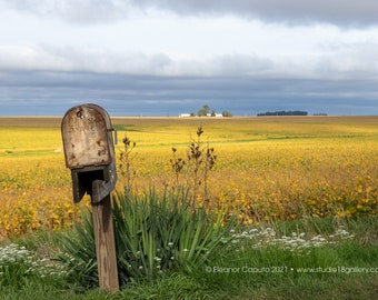 Golden Soybean and Rusty Mailbox Beaman, Grundy County Iowa - Photography by Eleanor Caputo - Prints - Metals - Canvas Wrap - Greeting Card