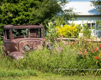 Old Rusty Jalopy and wildflowers, Grundy County Iowa - Photography by Eleanor Caputo - Prints - Metals - Canvas Wrap - Greeting Card