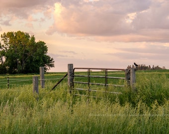 Morning Songbird on Gate, Beaman Iowa Grundy County  - Photography by Eleanor Caputo - Prints - Metals - Canvas Wrap - Greeting Card