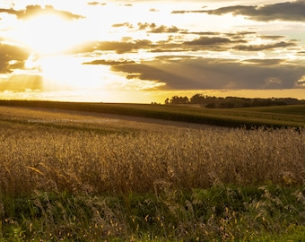 Golden Waves of Grain at Sunset - Rural Tama County Iowa - Photography by Eleanor Caputo - Prints - Metals - Canvas Wrap - Greeting Card