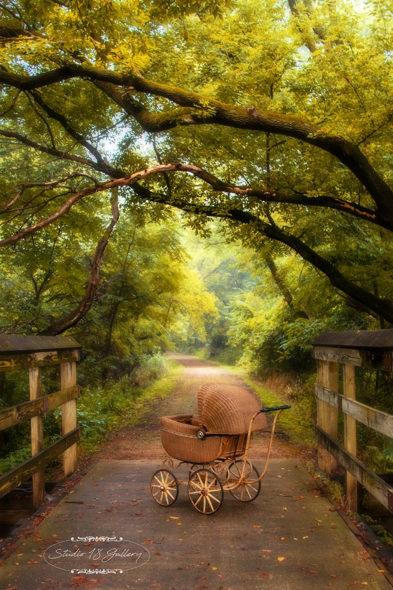 Baby Buggy Photography by Eleanor Caputo  Prints  Metals  image 0