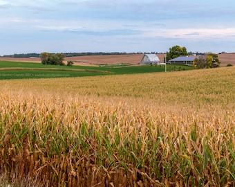 Rural Iowa Cornfield and Barn - Tama County Iowa - Photography by Eleanor Caputo - Prints - Metals - Canvas Wrap - Greeting Card
