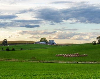 Lush Green Alfalfa Fields at Sunset - Rural Tama County Iowa - Photography by Eleanor Caputo - Prints - Metals - Canvas Wrap - Greeting Card