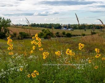 Sunflowers and Farmland - Rural Tama County Iowa - Photography by Eleanor Caputo - Prints - Metals - Canvas Wrap - Greeting Card