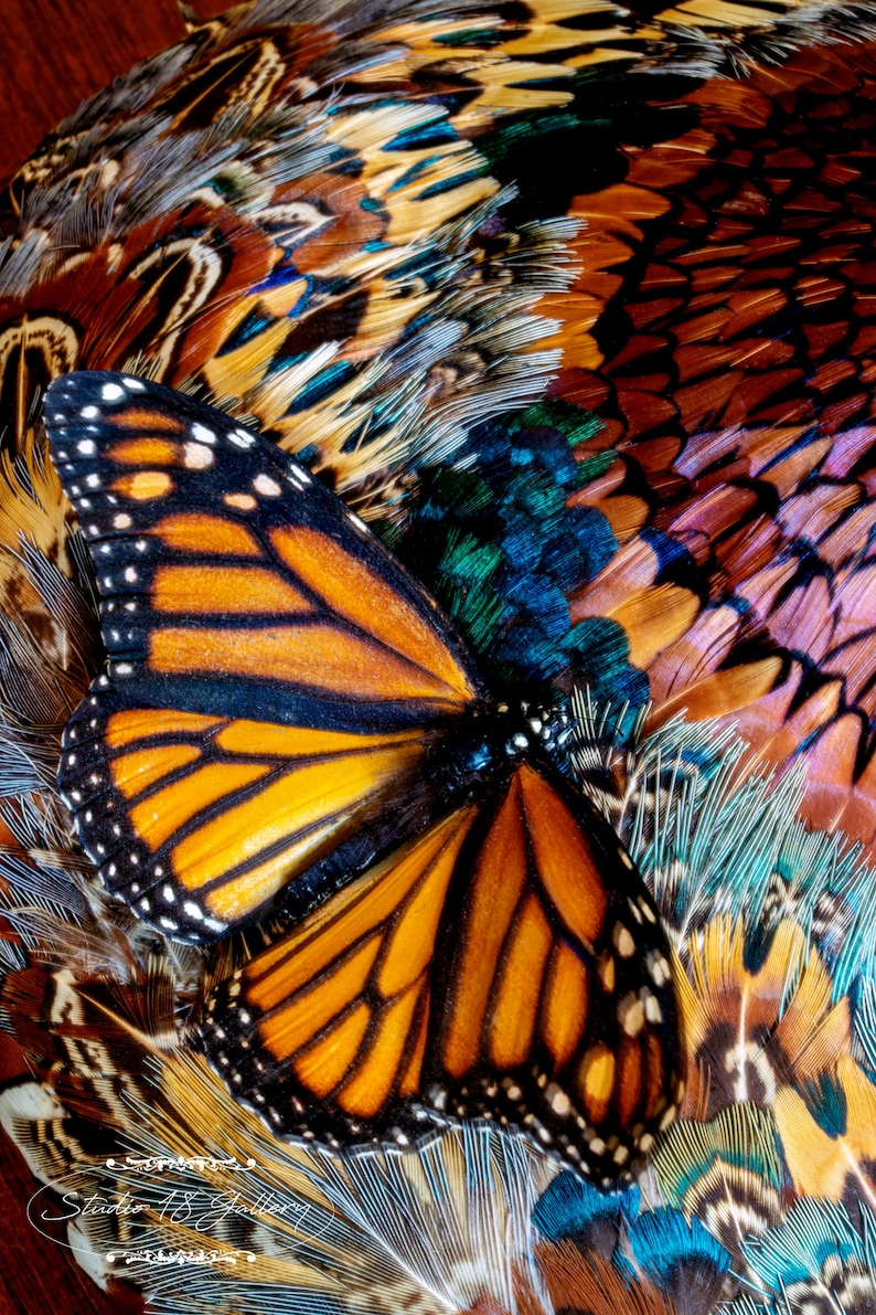 Butterfly and Feathers  Still Life Photography by Eleanor image 0