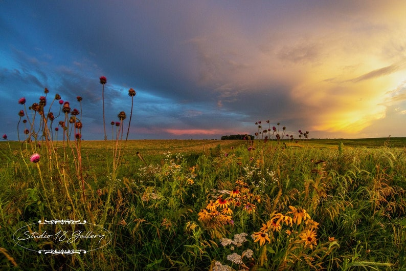 Iowa Wildflowers Photographic Prints Canvas Metals   Iowa image 0