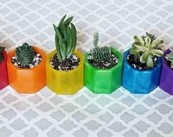 Rainbow planters, succulent flower pots, chakra planters, LGBTQ pride flower pots, resin planters, 2 inch succulent pots