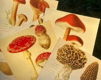 Five Mystery Postcards! Botanical Bundle | Cottagecore, Dirtcore, Scrapbooking, Stationary