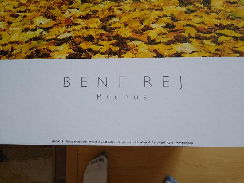 Bent Rej Prunus Autumn Leaves Print 24 x 24 mounted on hard board