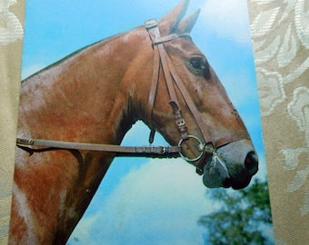 Postcard With Brown Horse With Bridle Vintage