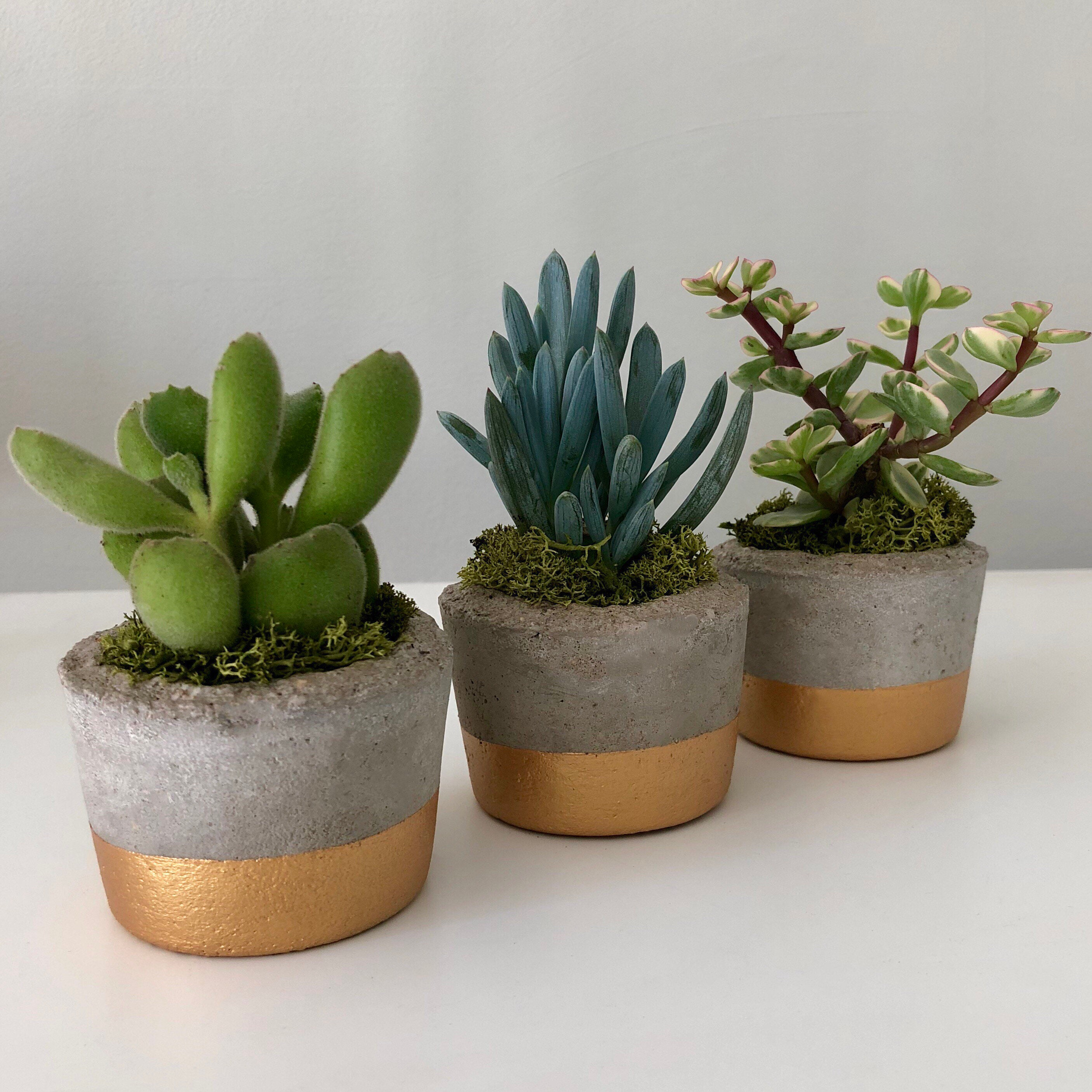 Concrete vases, the benefits of their use in Russia