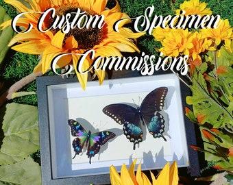 Custom Specimen Commissions Listing (U.S. Only!)