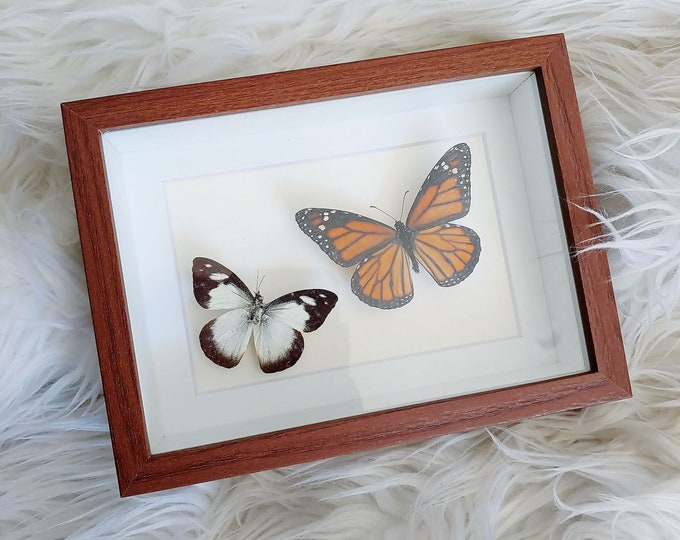 Real Monarch and Common Butterfly Pair Mounted and Framed - Brown Frame