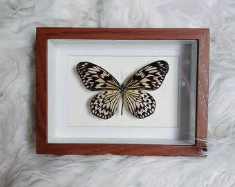 Real Rice Paper Butterfly Mounted and Framed - Brown Frame