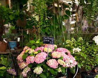 France, Paris, pink flowers, flower shop, Paris photography, flower photography, wall art, Paris print, Paris decor, fine art #025