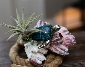 Sea Turtle with Tillandsia