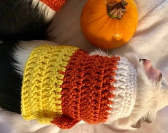 Guinea Pig Clothes, Candy Corn Costume, Halloween Costume, Guinea Pig Clothing, Small Pet Costume, Skinny Pig Sweater, Hairless Guinea Pig