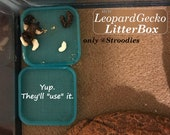 Stroodies LitterBox for Leopard Geckos