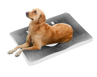 Pooch Pet Bed Many Sizes
