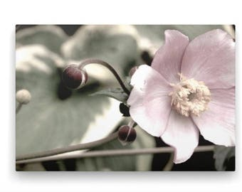 Pink Flower on Canvas