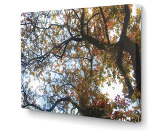 Fall Tree on Canvas