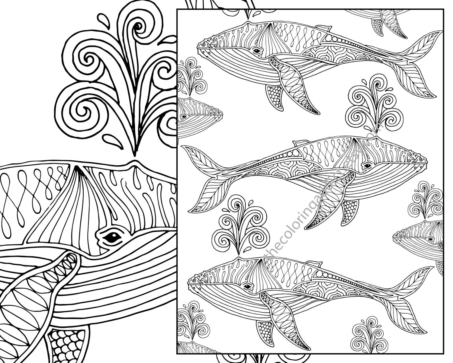 whale adult coloring page nautical adult coloring sheet