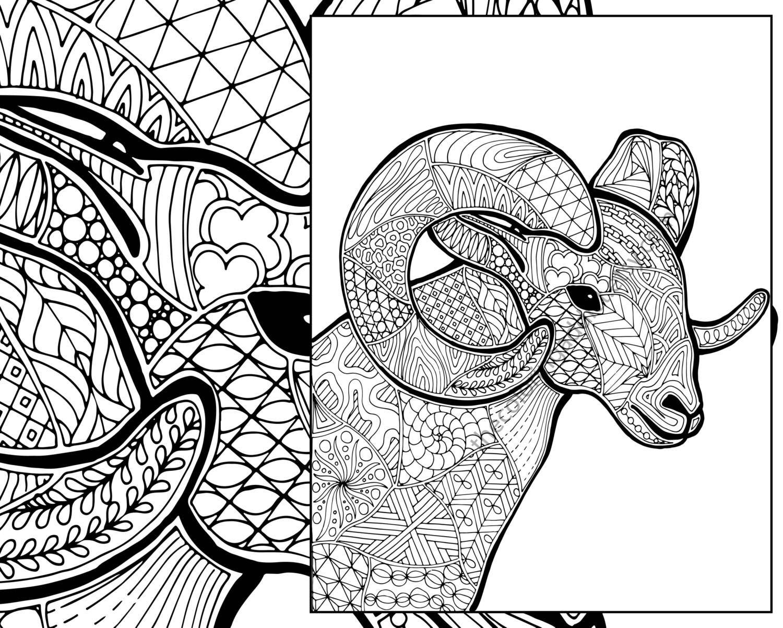 ram sheep coloring sheet animal coloring pdf zentangle   Etsy