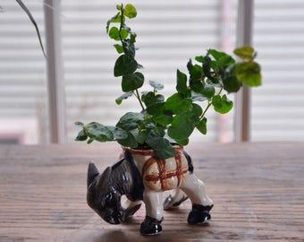 Occupied Japan Ceramic Donkey Planter