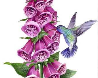 Hummingbird and foxgloves watercolour painting