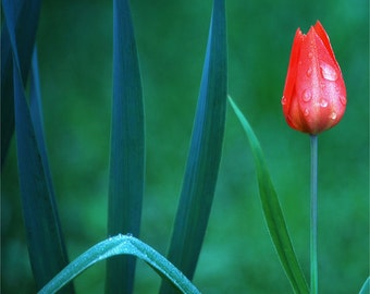 Tulip Mandala card