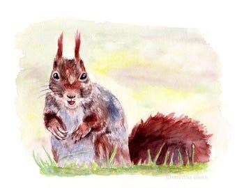 Eichhörnchen braun Nagetier Natur Aquarell Druck Print