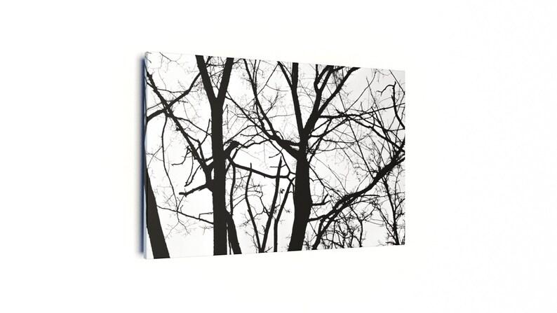 Winter Trees image 0