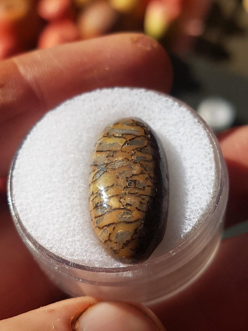 18ct Utah Dinosaur Bone cabochon