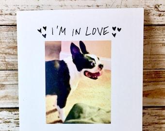 I'm In Love, Boston Terrier Love Card