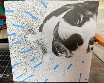 Bandit Burst of Sunshine Card, Boston Terrier Card
